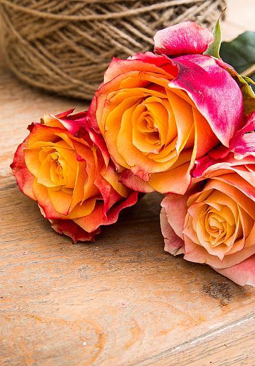Van der Deijl Roses.